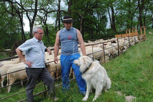 Zľava V. Demko a F. Malačina. Pri košiari v čase dojenia oviec.