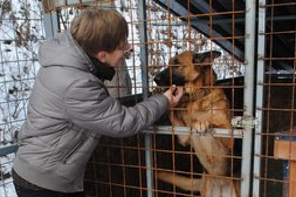 Útulok. Momentálne je tu asi 43 psov, ktoré potrebujú nový domov. Na snímke Z. Klincková.