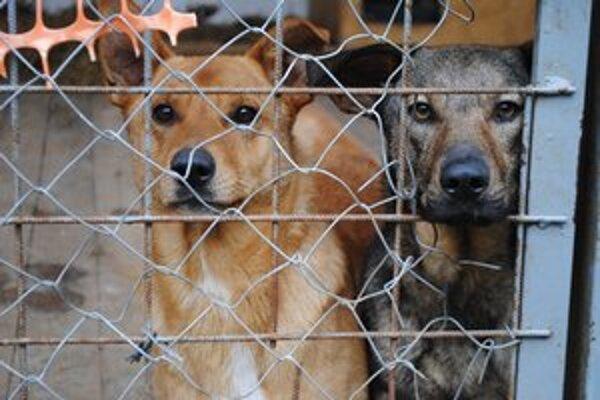 Psy v útulku. Ich osud je nejasný, občianske združenie nemá náhradné priestory.