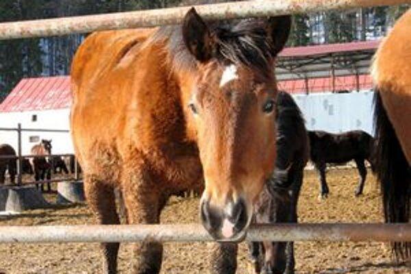 Chov koní, huculov a norikov, má na Muránskej planine tradíciu. Tieto plemená chovajú na Veľkej lúke nad Muránskou Hutou.