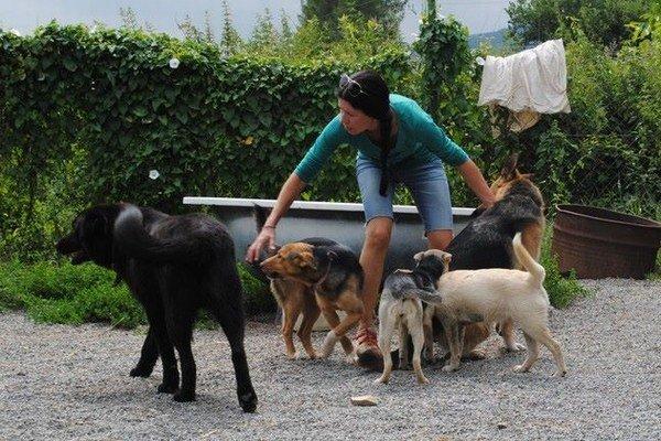 Karanténa v Bardejovskej Novej Vsi. Miestni tu opustených psov nechcú.