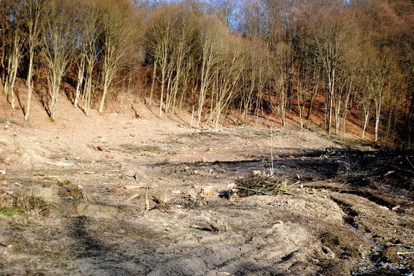 Vyrúbaný les v pri obci Oľka. Tu má stáť vrtná plošina.