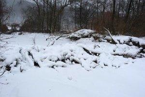 Bobria hrádza neďaleko Breznice. Vodný živočích začal osídľovať miestne potoky, kde si buduje svoje hrádze.