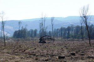 Vyrúbané stromy pri Turanoch ad Ondavou.