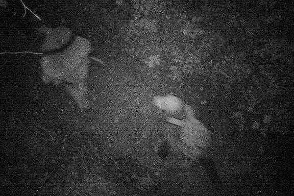 Zábery z kamerového systému.