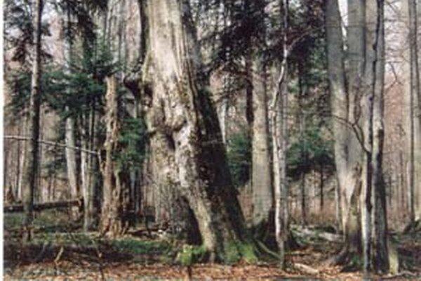 Prales Stužica v Národnom parku Poloniny je časťou jedľovo–bukových pralesov, ktoré UNESCO pripísalo do zoznamu svetového prírodného dedičstva.