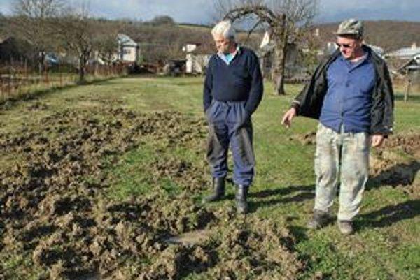 Po nočnom nájazde. Takto rozryli svine trávu pána Dušana. Rovnako dopadla aj pšenica pána Andreja. Premočená pôda bola ráno plná stôp. Nám sa neželaných stravníkov nasnímať nepodarilo.