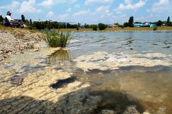 Hlavne v lete sa v prírodných vodách môžu objaviť sinice.