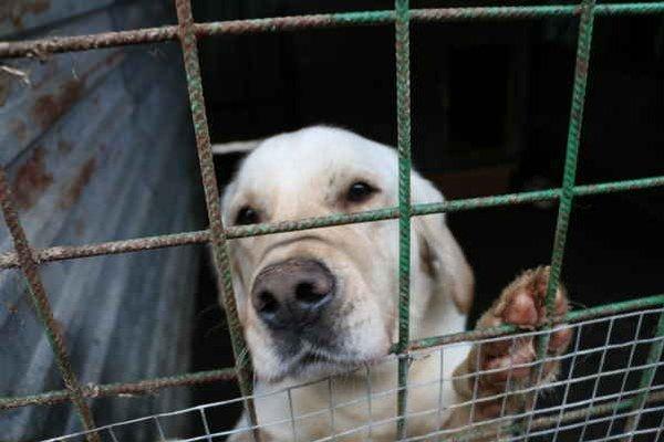 Nechcené a zatúlané psy. Na domov ich čaká viac ako päťdesiat.