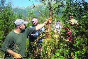 Boľševník sa veľmi rýchlo rozširuje, vyznačuje sa rýchlym rastom, dobrou vitalitou a ročne vytvorí až 20-tisíc semien. Okrem toho, že je nebezpečný pre človeka, vytláča pôvodné druhy našich rastlín.