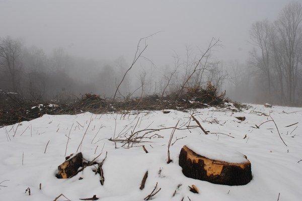 Výrub stromov. Biela hora od roku 2009 už nie je lesoparkom, ale hospodárskym lesom, kde prebieha výrub stromov.