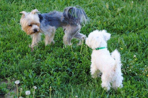 Ak prejde  návrh, psy si už voľne v mestskom parku nezabehajú.