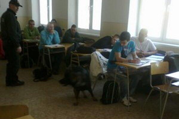 Ukážka práce policajných psov. Vyhľadávajú drogy v taškách žiakov.