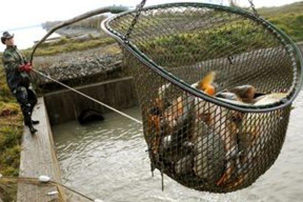 V iňačovských rybníkoch vylovia ročne niekoľko ton rýb.