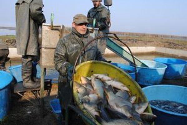Výlov kaprov. Z Iňačovských rybníkov vylovia približne 100 ton rýb.