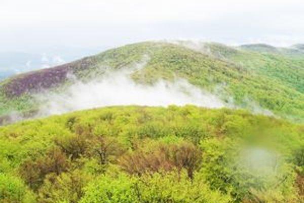 Nežabec. Štát chce vzácne bukové pralesy chrániť najvyšším 5. stupňom ochrany v bezzásahovom režime.