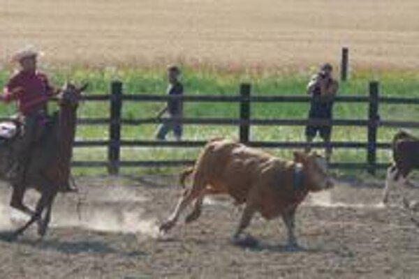 Oddeľovanie dobytka. Patrilo medzi najatraktívnejšie disciplíny.