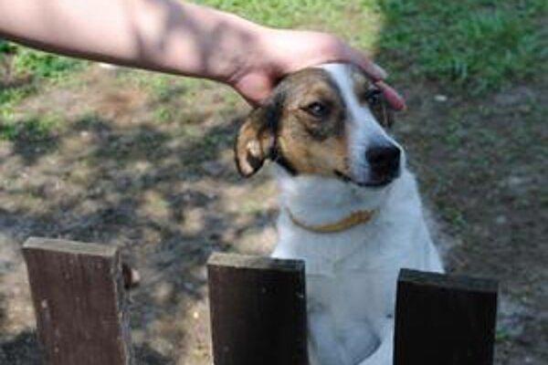 Jacky. Študentka chcela pomôcť tomuto psíkovi.