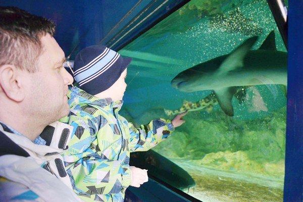Výstava žralokov. Dostala sa do diskusie mestského zastupiteľstva.
