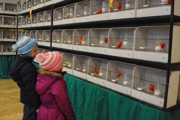 Výstava exotického vtáctva prilákala množstvo zvedavcov.