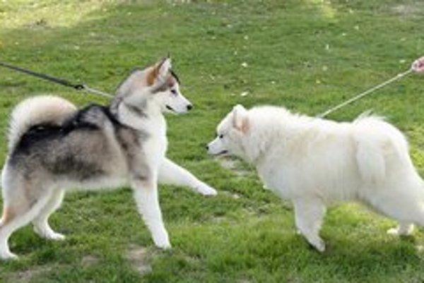 Dva psy sa stali obeťou Krompašanov.