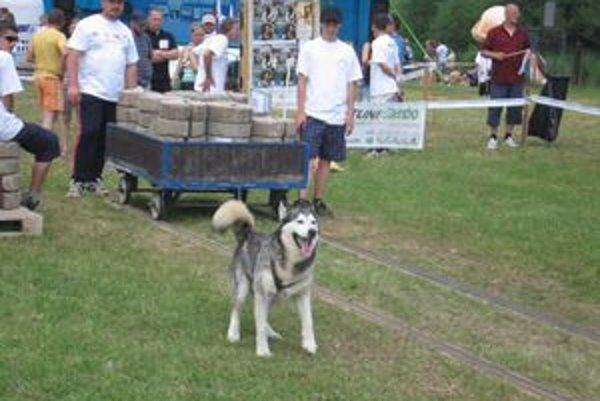 Weight pulling. Psy na súťažnej dráhe vydajú so seba maximum.