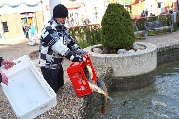 Na snímke vypúšťanie kaprov do fontány na Námestí svätého Egídia v Poprade.