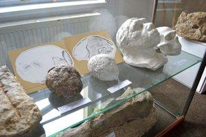 Vyliatky mozgovne neandertálca. Mnohí si mysleli, že sú zo sadry.