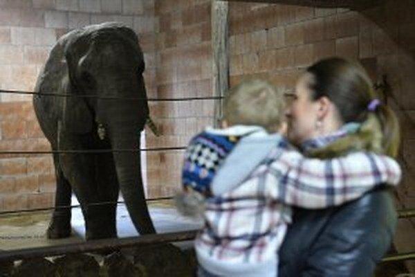 Zvieratá si v zoo Bojnice vlani pozrelo 276 799 ľudí.
