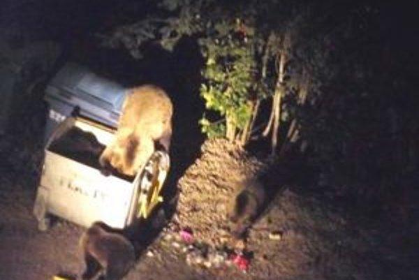 Medvede. Hodujú pri kontajneroch najmä v noci.