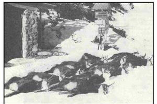 Ohňostroje strieľali aj v Tatrách. V roku 1971 tam ľudia vystrašili stádo kamzíkov na smrť.