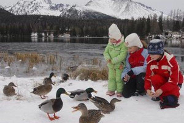 Divé kačice ostávajú pri tatranských plesách len pokiaľ nezamrznú.
