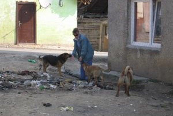 Odchyt psov. Takto vyzeral včerajší odchyt psov. Sučky šli priamo na sterilizáciu k veterinárovi, iné psíky a štence do útulku.