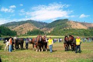 Zbiera ocenenia. Michal Raškevič (v strede) s víťazným párom koní.