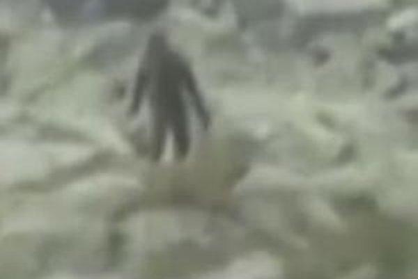 Dvojmetrový chlpáč. Po Tatrách vraj behá Yeti.