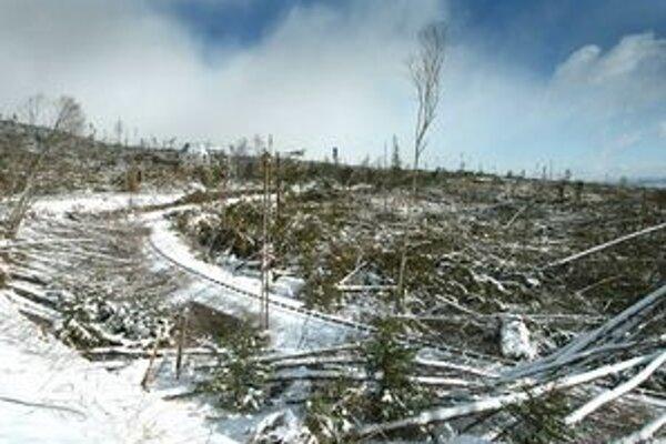 Čoskoro, presne 19. novembra, uplynie päť rokov od veternej kalamity, ktorá navždy zmenila tvár tatranského lesa.