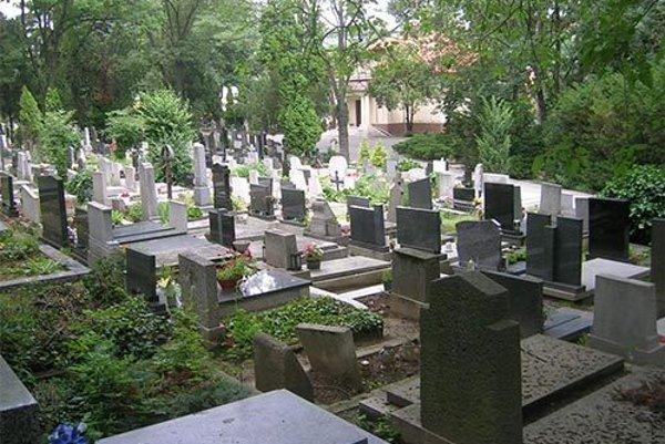 Pre práce spojené s výrubom bude dočasne obmedzený prechod návštevníkov cez centrálny chodník cintorína.
