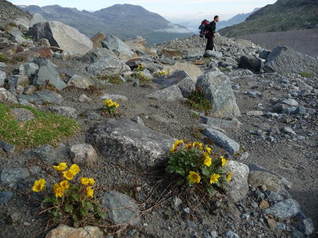 Tieto kvety žijú iba z lásky k horám. Inak sa to nedá vysvetliť pri pohľade na toto miesto.