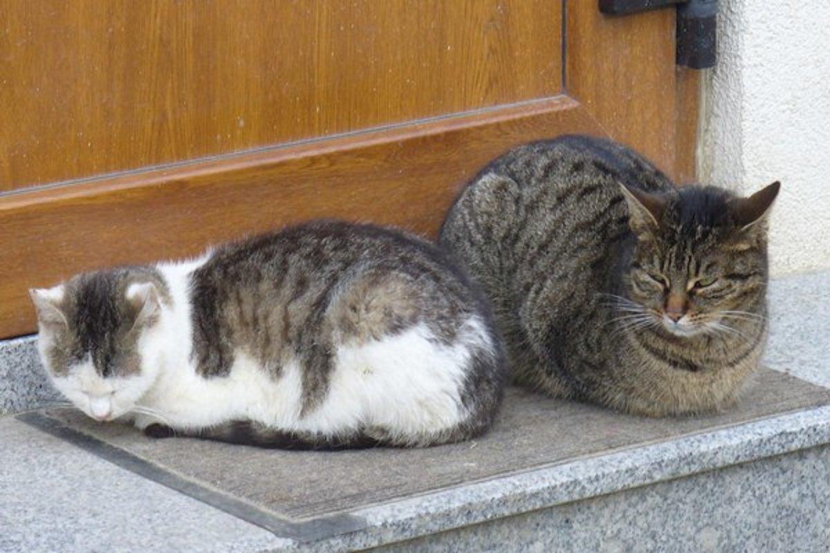 Veľká mačička stará dáma
