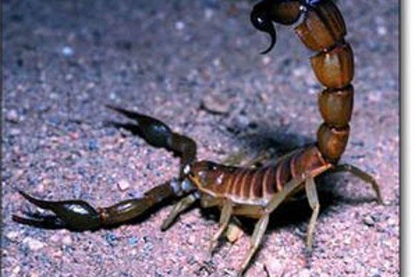 Škorpióny dokážu bez potravy prežiť aj 500 dní a sú odolné aj voči vysokej radiácii.