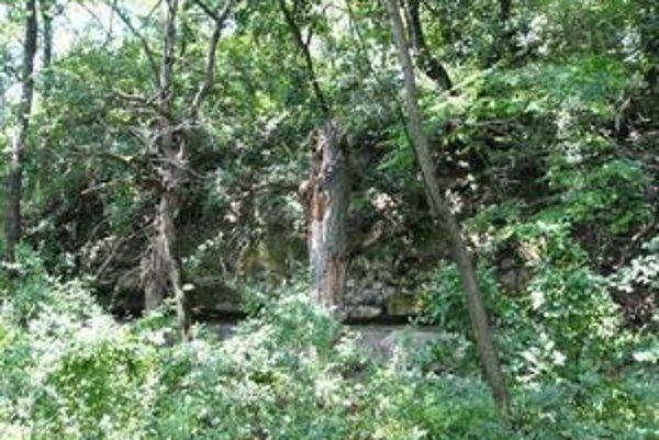 Maginhrad. Dnes sú tu už len ruiny, ktoré len ťažko medzi stromami nájde nezasvätený.