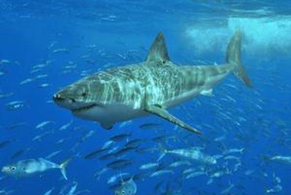 Žralok.