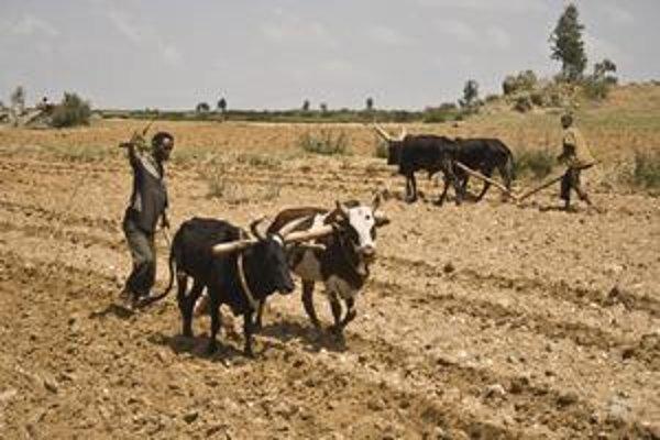 Farmári. Väčšina Etiópčanov sa živí pestovaním plodín.