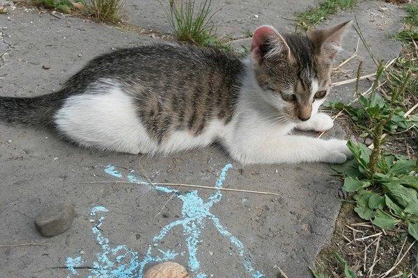 Mačiatka hľadajú aktuálne domov.