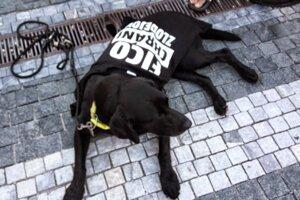 Protestoval aj pes.