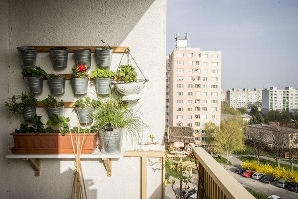 Rastliny by nemali byť väčšie ako balkón samotný.