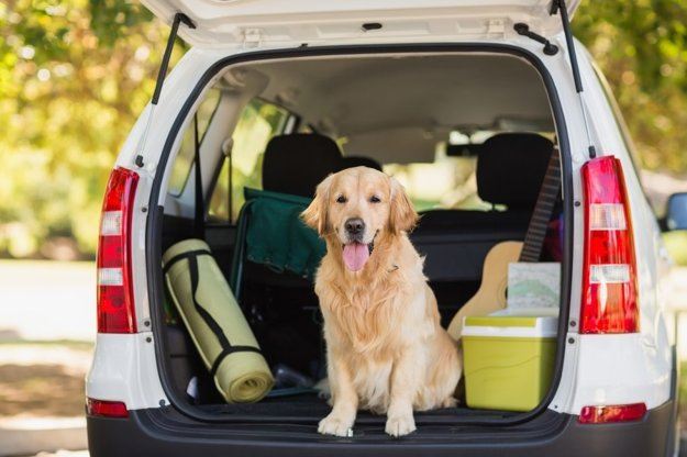 Na cestovanie so psom sa treba pripraviť.