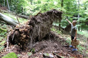 Rozmočená pôda a silný nárazový vietor stromy väčšinou nezlomia ale vyvrátia.