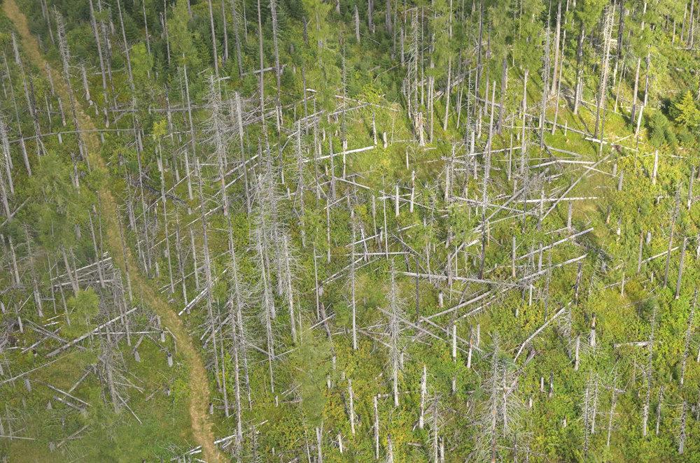 Letecký pohľad na oblasť zasiahnutú lykožrútom počas leteckej prehliadky územia lesov napadnutých lykožrútom vo Vysokých Tatrách. Snímka je z 30.augusta 2016