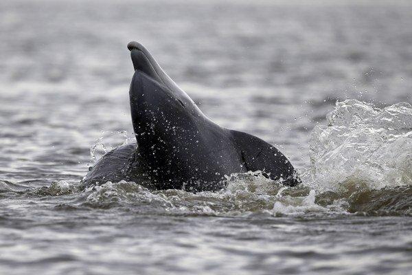 Na problematiku lovu delfínov v Taiji upozornil dokumentárny film The Cove v roku 2009.
